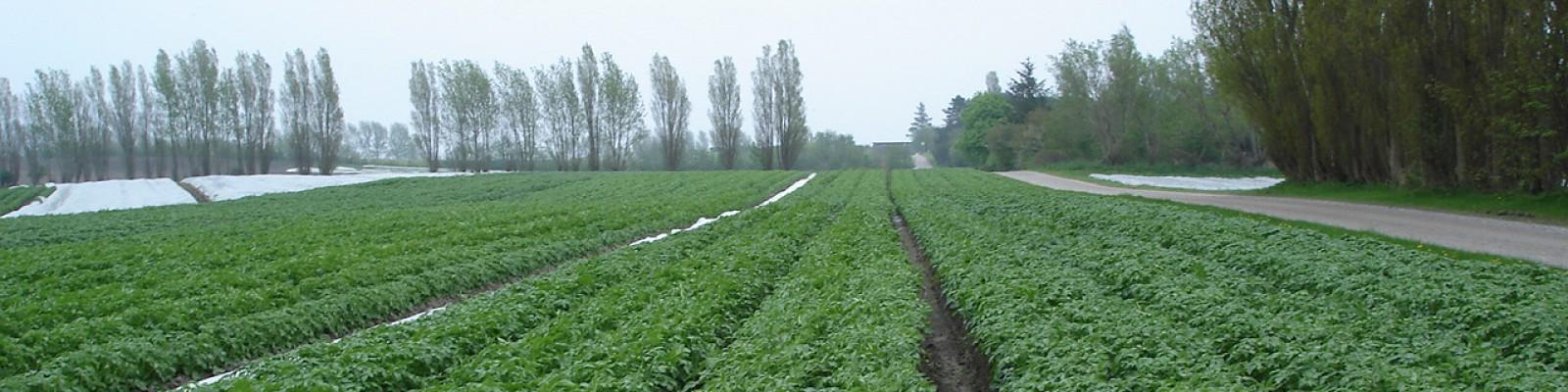 Samsø Kartofler